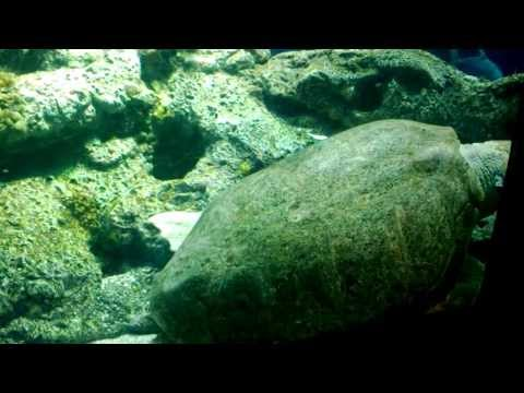 Aquarium Fish & Jellyfish with Atmospheric Ambience & Relaxing Water Rumble Noise