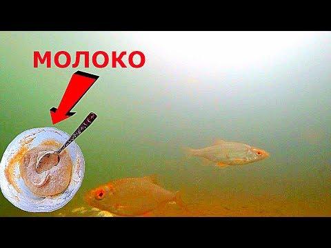 БОЛТУШКА НА МОЛОКЕ работает! Рецепт + подводная съемка