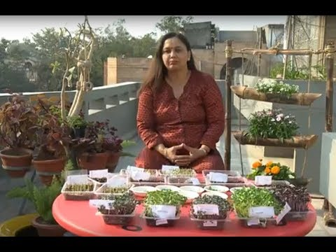 छत्त पर बाग़वानी - How to grow microgreens on your Terrace Garden