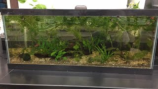 Classroom Fish Tank Update and a new tank! What should go in it?