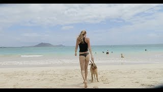 Golden Retriever Puppy Hawaii