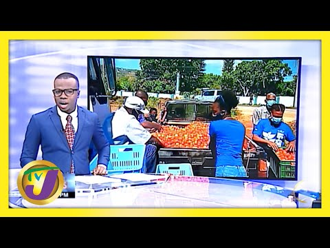 RADA Buys 16,000 Pounds of Tomatoes in New Forest   TVJ News