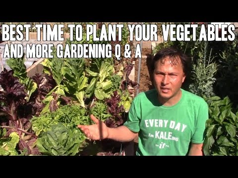 Best Time to Plant Your Vegetables & More Organic Gardening Q&A