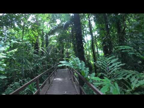 4K video: Penang, Malaysia May 2017