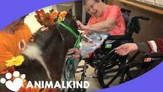Mini horses connect with senior citizens