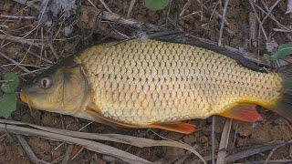 Рыбалка охота осенью на карпа в сентябре My fishing