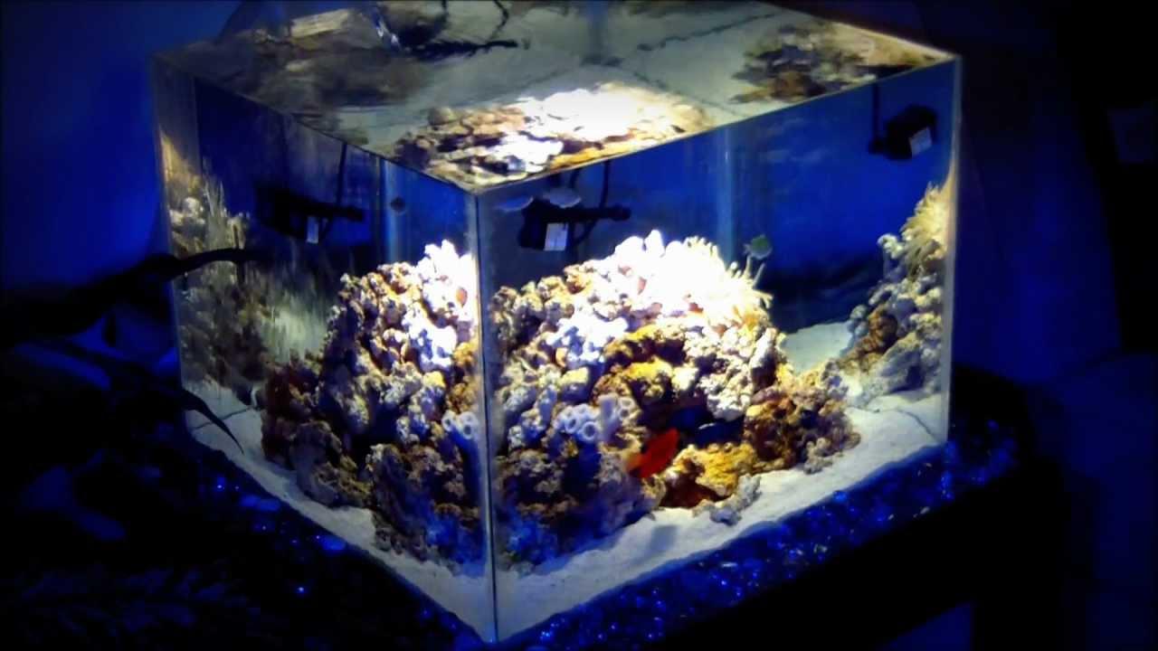 diy nano reef aquarium