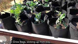 aquaponic-wicking-grow-bag-bed-prototype-build