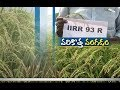 Jaikisan AP | 17th Oct'18 | New Paddy Variety of IIRR 93R Cultivated Nellore Farmers