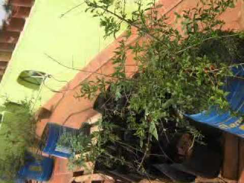 Terrace garden kms house in madurai cultivating vegetable for home terrace garden kms house in madurai cultivating vegetable for home use solutioingenieria Images