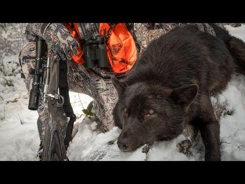 SHADE Of BLACK - Wolf Hunting Montana