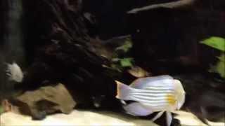 Интерактивный аквариумный туризм №27(Рубрика, куда вы присылаете свое видео и описание аквариума, а мы делаем из этого выпуск. Тема для Заявок:..., 2015-02-25T18:08:03.000Z)