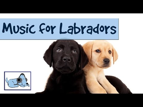Music for your Labrador - Calming Music for Your Pet Dogs 🐶 #RETLAB04