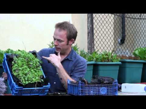 How to grow the best salads for the lowest cost