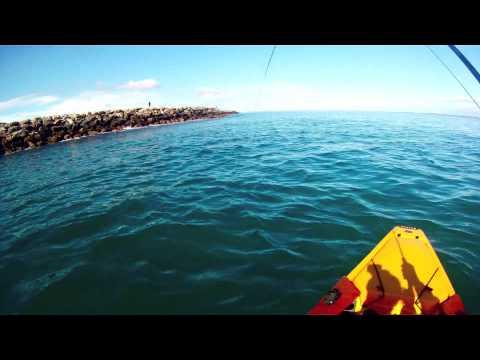 Western Australian Salmon on Fly
