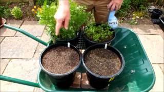 Grow Carrots in pots, tips plus a 4 pot update.