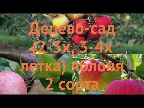 Яблоня обыкновенная Грушовка Московская - Медуница 🌿 обзор: как сажать, саженцы яблони