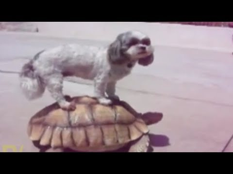 Best ANIMALS and KIDS FAIL COMPILATION - TRY not to LAUGH!