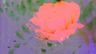 Alina Baraz - Be Good (lyric video)
