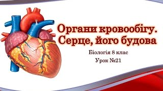 Серце: будова та функції. Робота серця