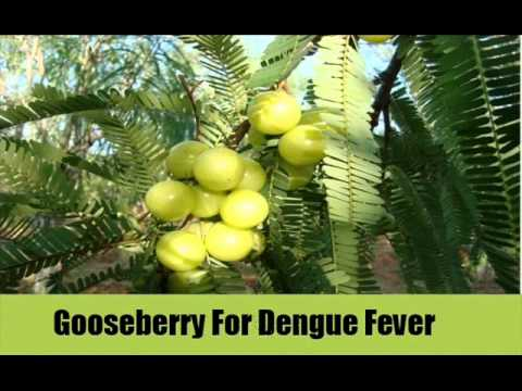 Top 10 Home Remedies For Dengue Fever