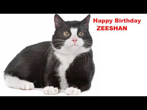 Zeeshan   Cats Gatos - Happy Birthday