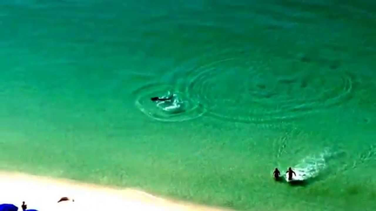 Destin Large Hammerhead Shark near miss! August 24th 2014 - YouTube