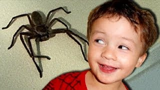 Big Mother Spider Excited Baby KIds React