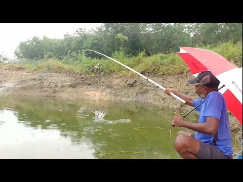 Fishing||Incredible fishing video||Suddenly heavy rain falls||Catching rohu fishes||With(big)hook