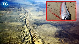 alerta-prximo-terremoto-aparece-el-pez-remo-en-baja-california-sur