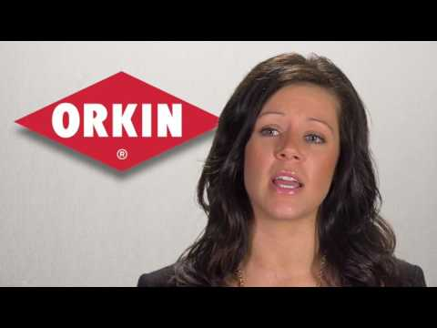 Benefits at Orkin