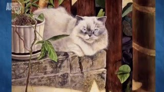 Кошек не любить нельзя  1 серия