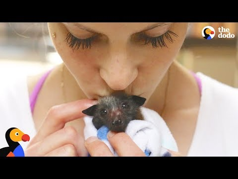 Woman Rescues Bats That Help Her Fight Anxiety   The Dodo