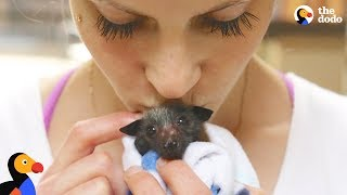 Woman Rescues Bats That Help Her Fight Anxiety | The Dodo