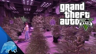 GTA 5 New Bikers DLC Weed Farm/Business