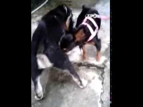 video 2014 01 04 18 49 27 namorando