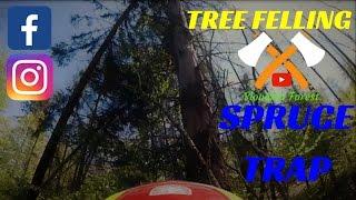 TREE FELLING#SPRUCE TRAP#TWO SPRUCES FELLING#STIHL Ms 440, OREGON BAR#(Ťažba takzvanej pasce)