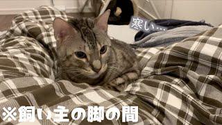 お風呂上がりに寒くて一緒に寝ようとする猫