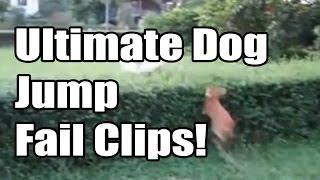 Major Dog Jump Fails Compilation