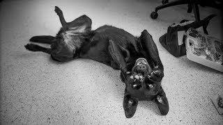 UA Canine Cognition Center