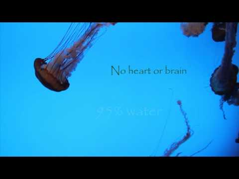 The Jelly Fish Facts