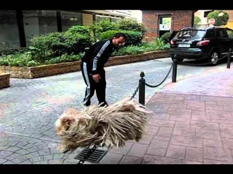 Slow Motion Puli