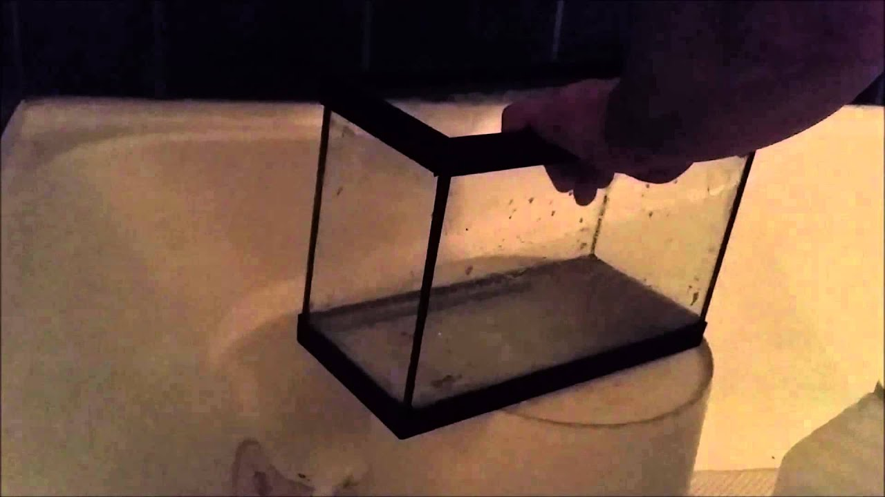 Cleaning a Glass Aquarium of Calcium Deposits the Fish Fin-atic ...