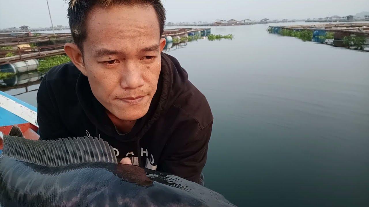 Download GANAS || Serangan Ikan toman di awal musim,spot 3 bulan tidak di casting