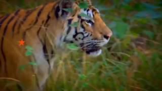 Подпольный рынок редких диких животных - Инсайдер