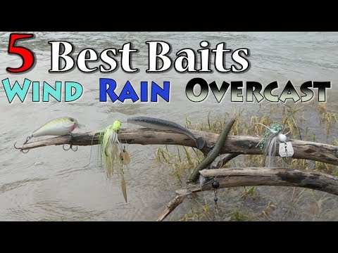 Top 5 Baits For Fishing Wind Rain And Overcast Conditions