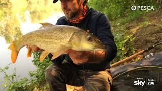 PESCA TV SKY 236 - BARBEL FISHING ACADEMY 3: Taglie XXL nella Bormida