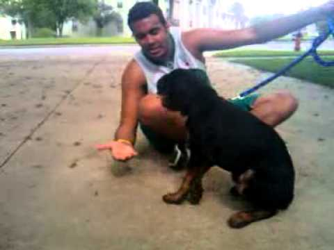 Hassan Makki Basket Ball Player In KSA   Play With His Rottweiler Dog