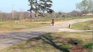 Gaited mule one of the best on youtube