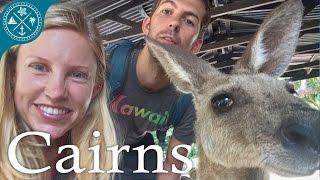 Visiting Cairns Australia! - Tons of crazy nature & animals!
